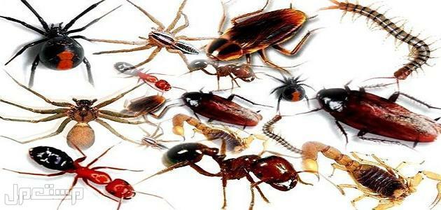 غسيل خزانات نظافة عامة مكافحة الحشرات نقل اثاث عزل حمامات -عزل اسطح