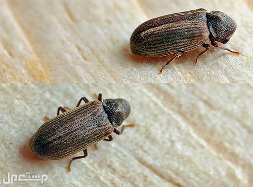 بخ مبيد رش مبيدات  مكافحة الحشرات تكافح حشرات بالرياض