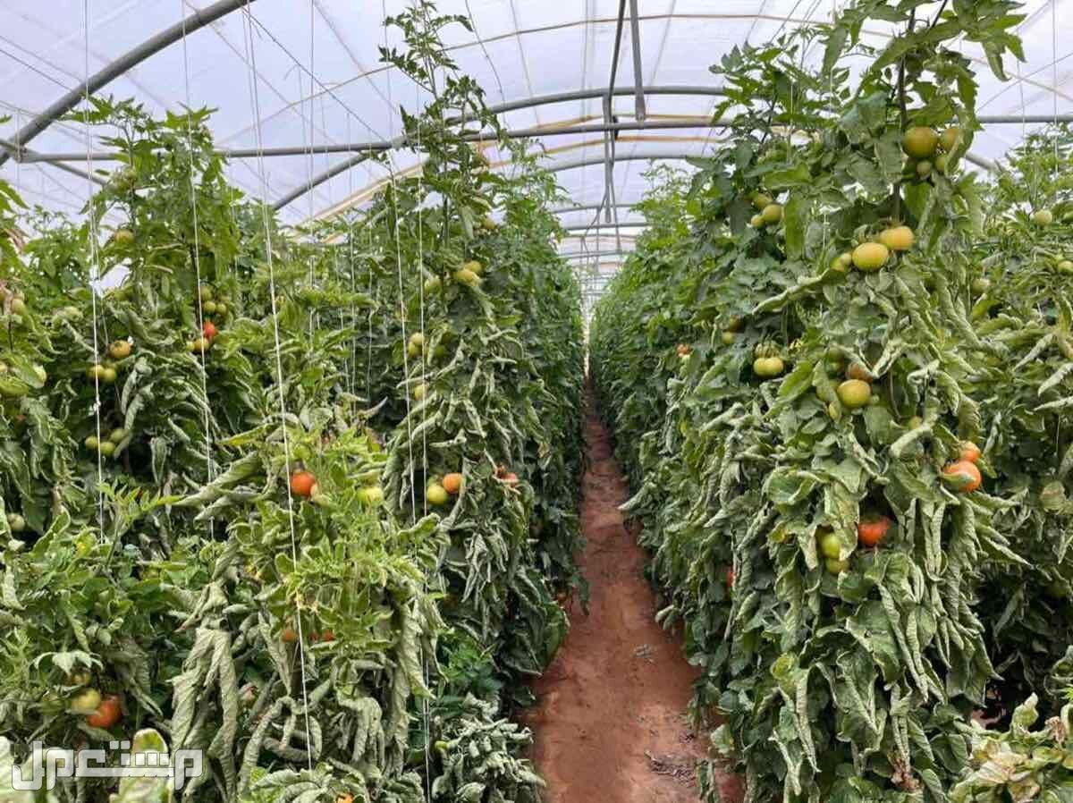 مزرعه للبيع ب5 مليون في حفيرة نساح