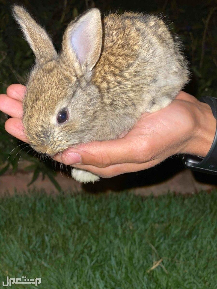ارانب صغيره جميله عرض خاص