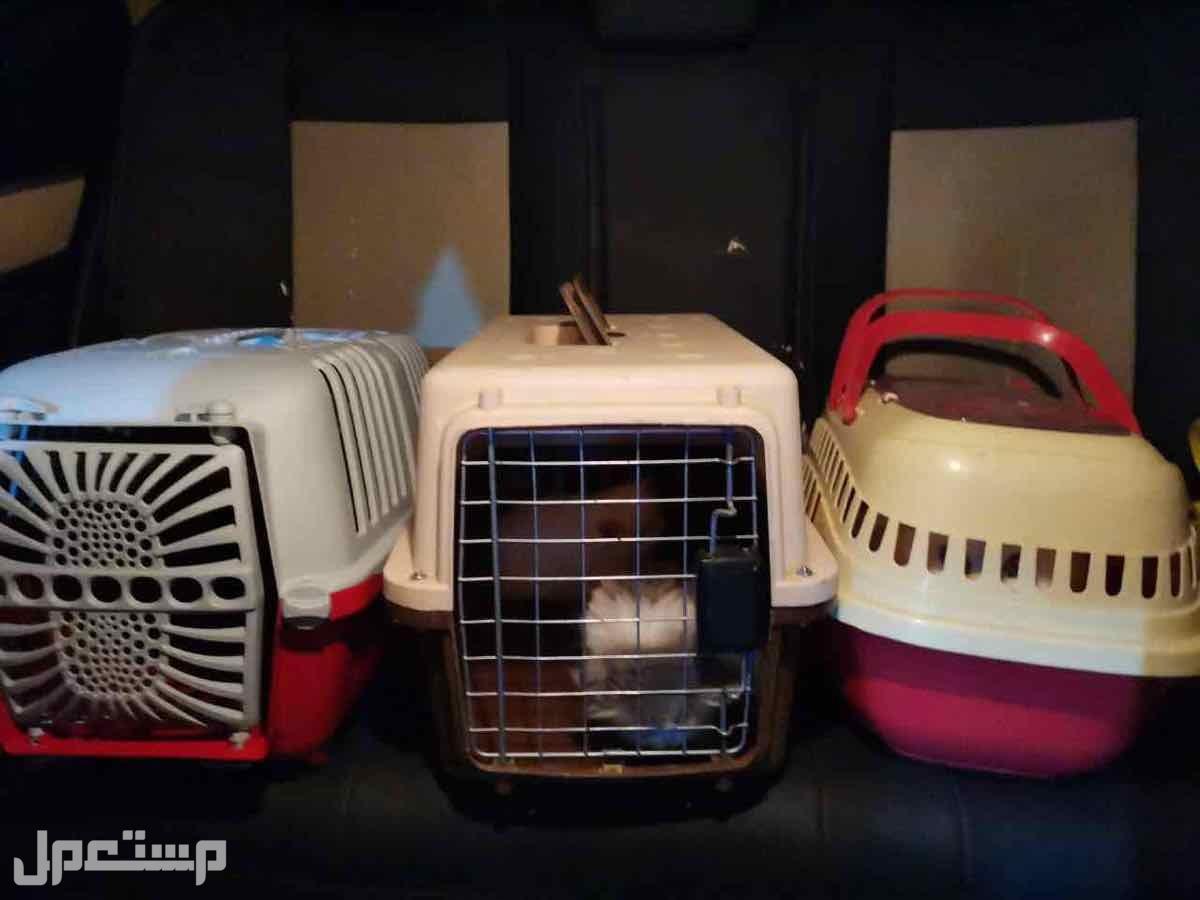شحن قطط و حيوانات اليفه من جدة الى ابها و الخميس