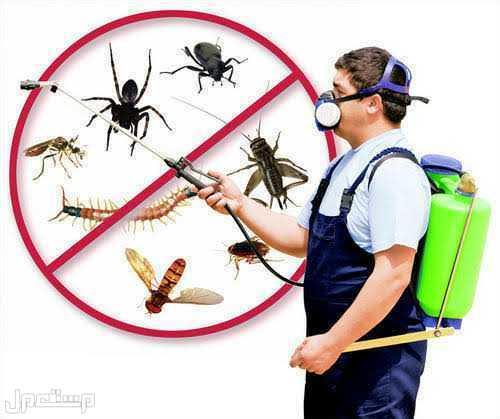 نظافه عامه ومكافحه جميع انواع الحشرات