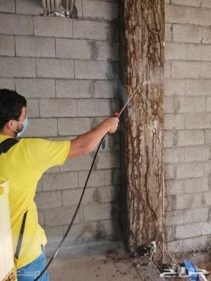 شركة مكافحة حشرات بجازان شركة رش مبيدات ومكافحة النمل الابيض