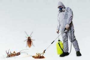 مكافحه حشرات نظافه عامه مكافحه جميع انواع الحشرات ابوظبى 0526168874