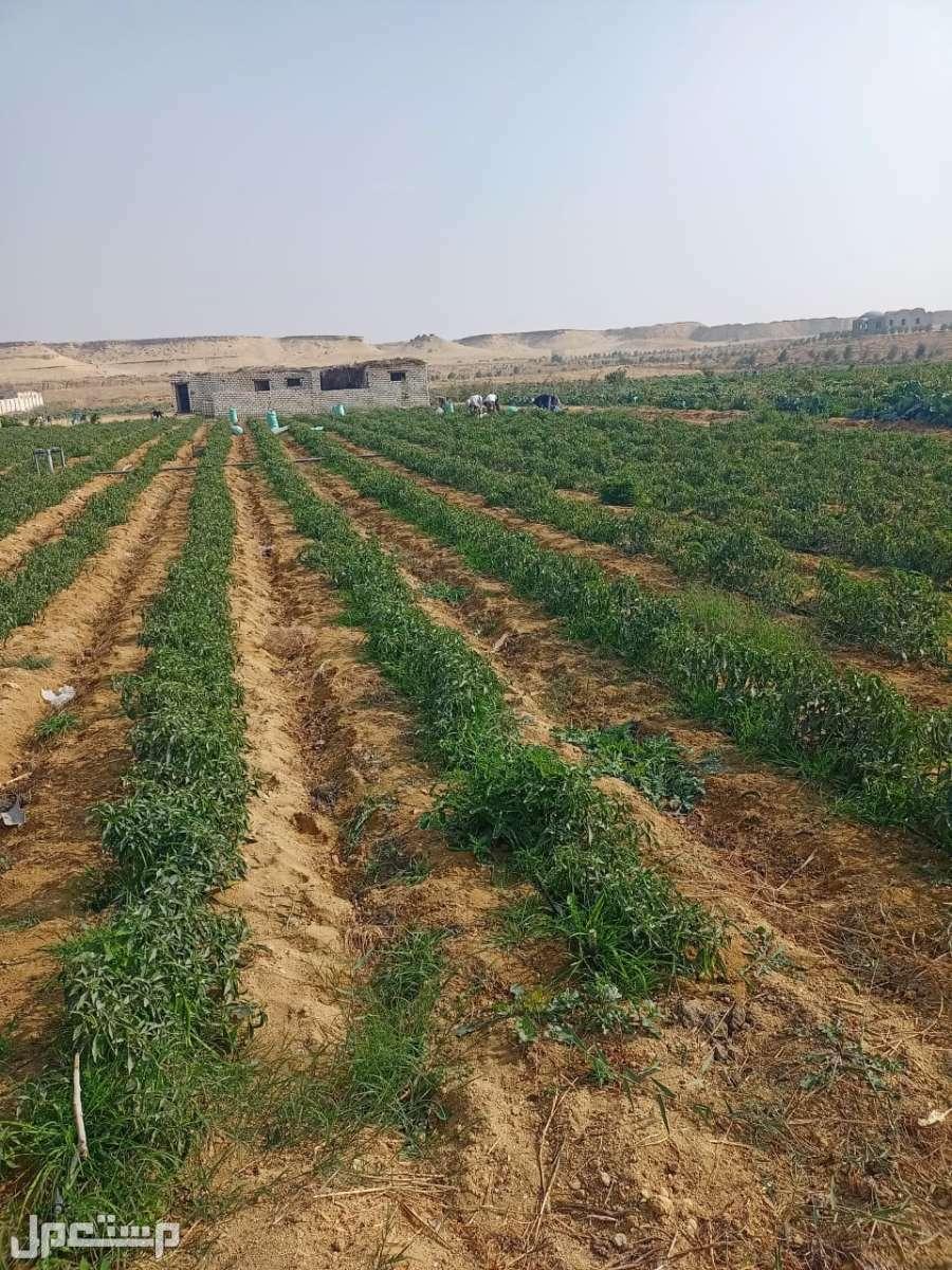 ارض زراعيه للبيع بمساحات تبدأ من 1 فدان