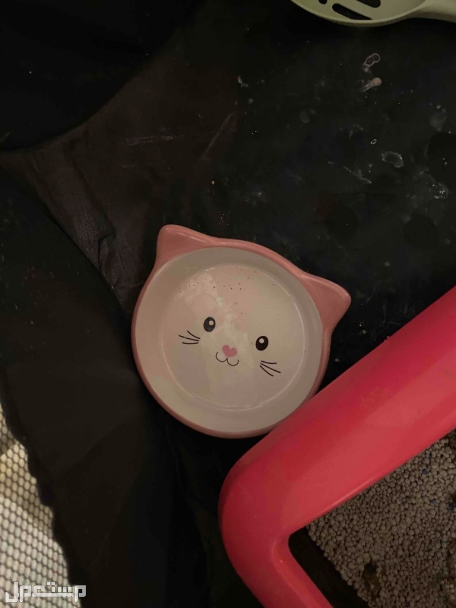 قطة هملايا عمرها 4شهور للبيع