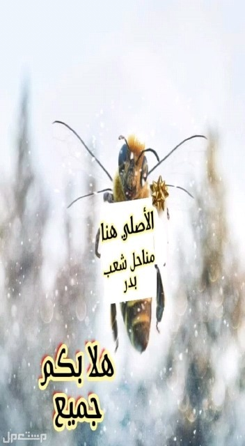 عسل وزعفران وسمن بقر بلدي مبخر