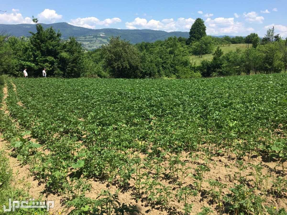 اراضي للبيع في البوسنه