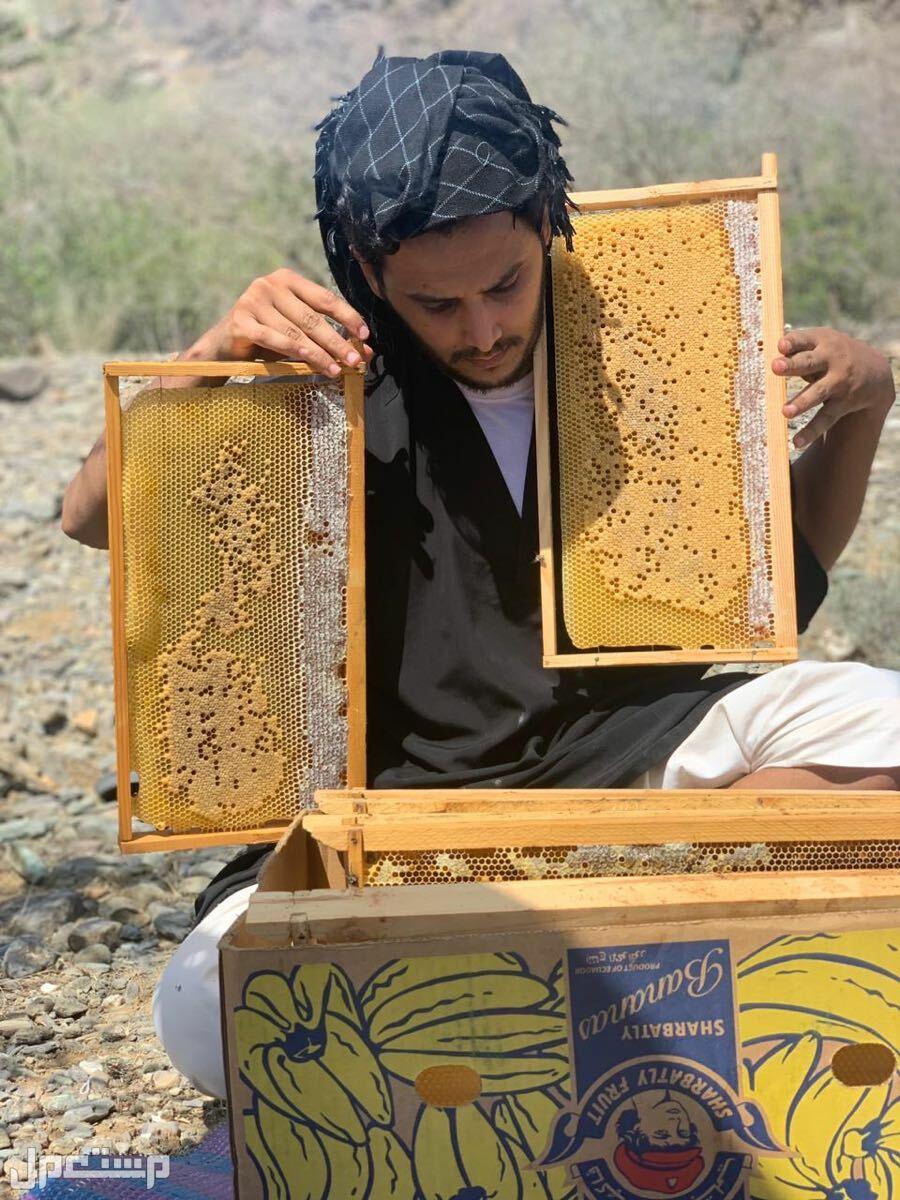 نحل وعسل