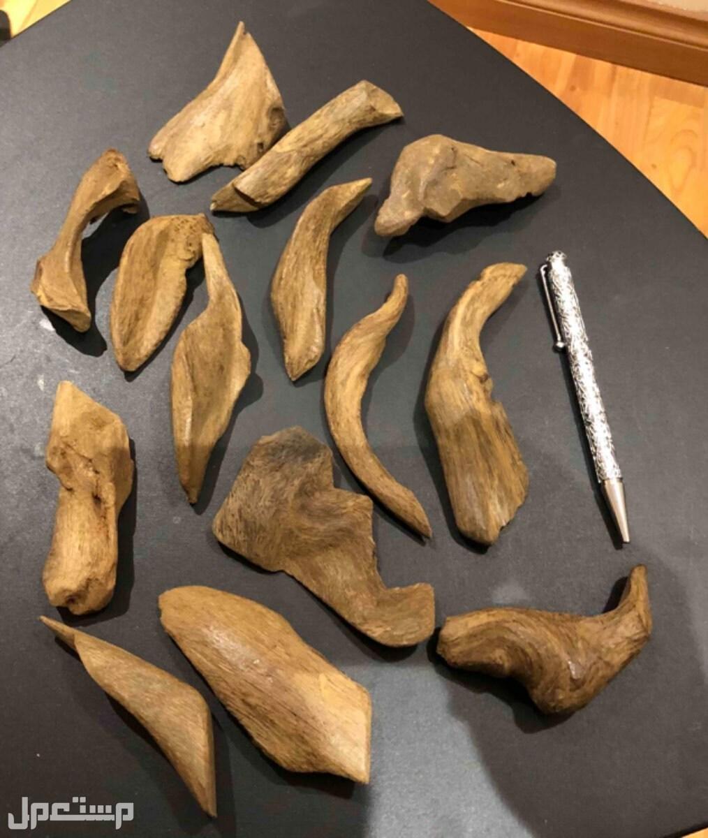 عود موروكي أصقون طبيعي 100% دبل سوبر قديم وفيه قطع تربل