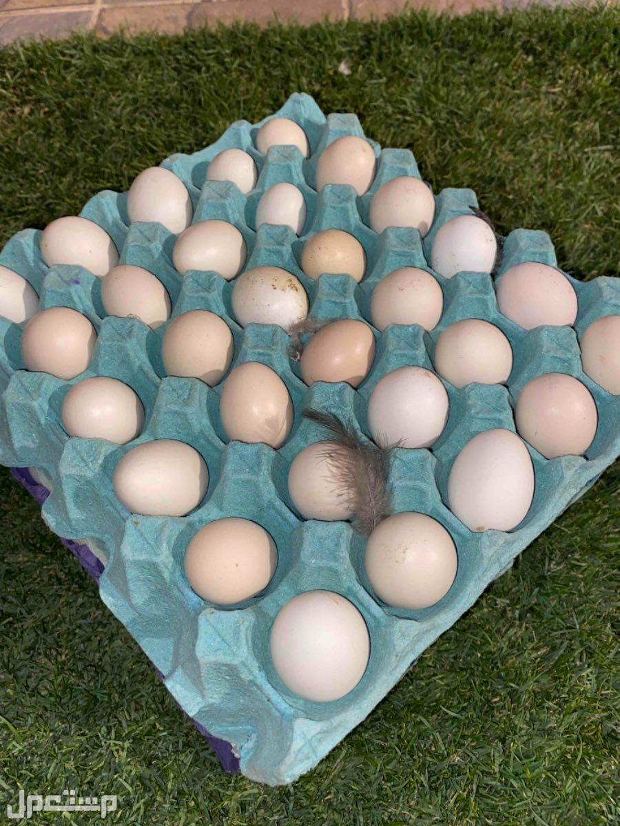 للاكل بيض دجاج بلدي طازج ب 15 ريال