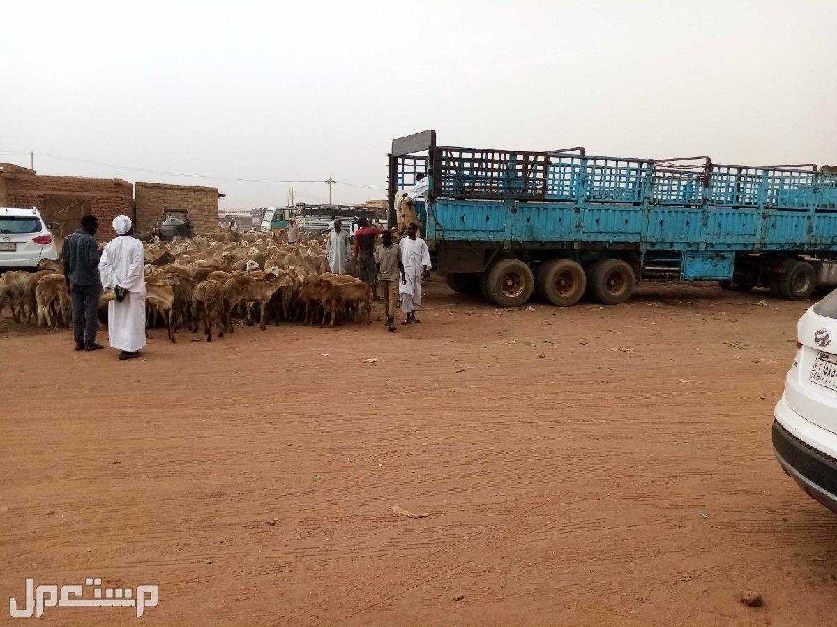 سائق شاحنة سوداني