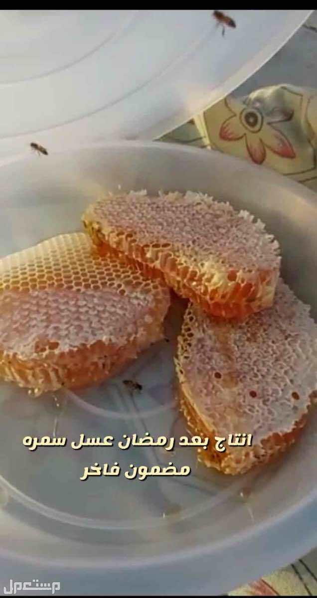 عسل طلح وعسل سمره