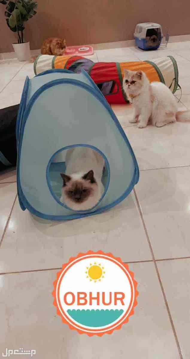 حلاقة قطط