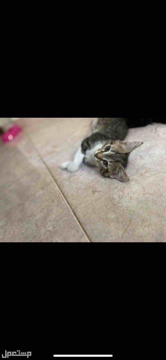 قطط  مكه